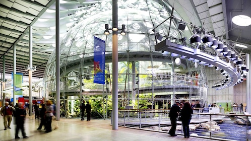 The Rainforest Dome at the California Academy of Sciences in San Francisco