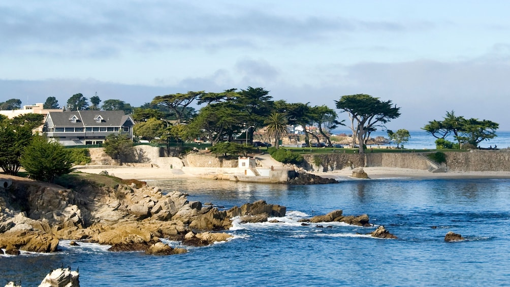 Show item 8 of 8. Rocky coast and cypress trees in Monterey