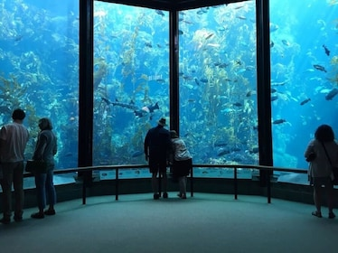 Monterey-bay-aquarium-sealife-17-mile-drive_1 (1).jpg