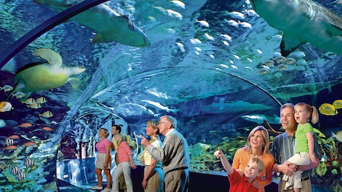 Visitors enjoy the aquarium inside Ripley's Aquarium of the Smokies in Tennessee
