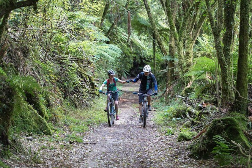 Show item 3 of 3. Timber Trail - Ongarue to Pureora Shuttle 2 Day Ride