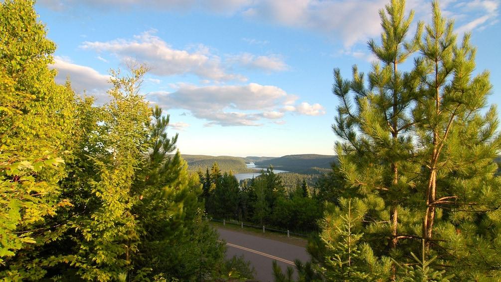 Foto 4 von 5 laden Wide shot through evergreens in the Laurentian Mountains