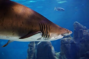 SEA LIFE Sunshine Coast Aquarium Entrance Ticket with Shark Dive Xtreme