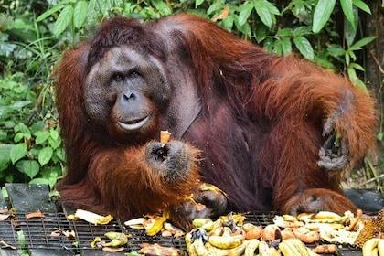 Semenggoh Wildlife Centre & Annah Rais Longhouse