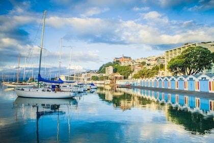 Wellington City Sights & Coastline Tour