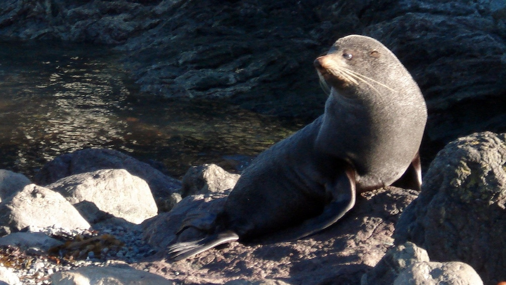 Show item 3 of 8. seal on the rocks