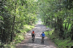 3-Day Biking and Hiking; Nature, Coffee, Culture and Cocora Valley from Per...