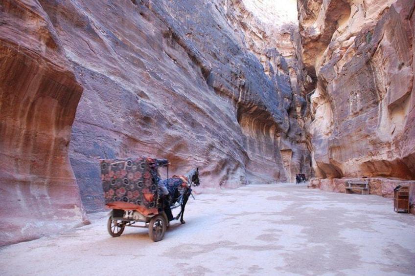 Donkey Taxi - Petra