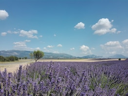 Lavender Half-Day Tour Morning from Marseille