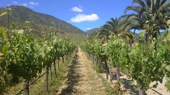 Full Day Private Casablanca Valley Wine Tour From Santiago
