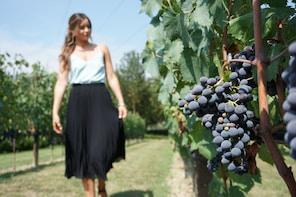 Small Group - Half-Day Chianti Wine Tour
