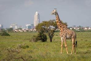4 Days Nairobi National Park & Amboseli Safari