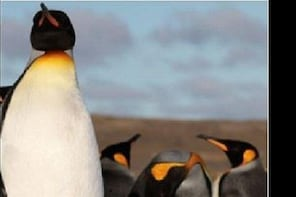Full Day King Penguin National Park