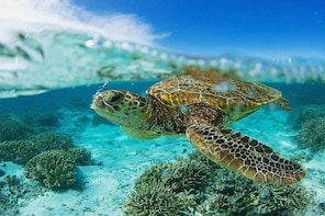 Private Catamaran Cruise to Tobago Cays with Snorkeling and Beach BBQ
