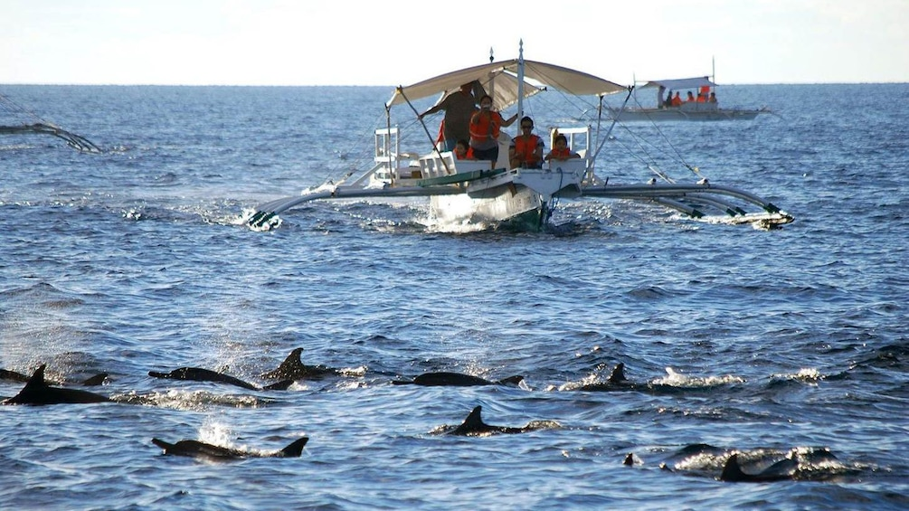 Show item 2 of 5. Dolphins traveling along the boat in Bohol