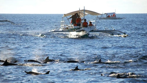 Dolphins traveling along the boat in Bohol