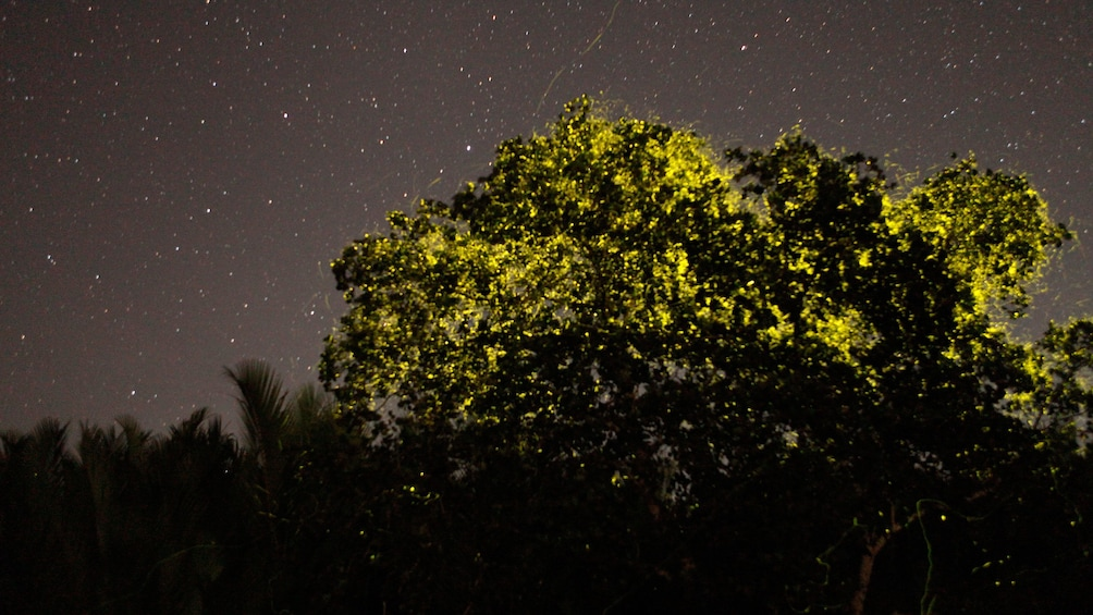 Show item 1 of 5. Spectating the fireflies at night in Bohol