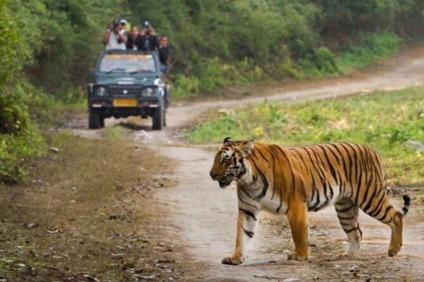 Show item 4 of 6. Chitwan Jungle safari Guided Private Day Tour