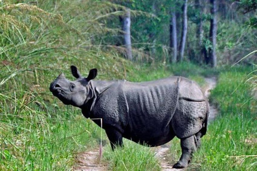 Show item 2 of 6. Chitwan Jungle safari Guided Private Day Tour