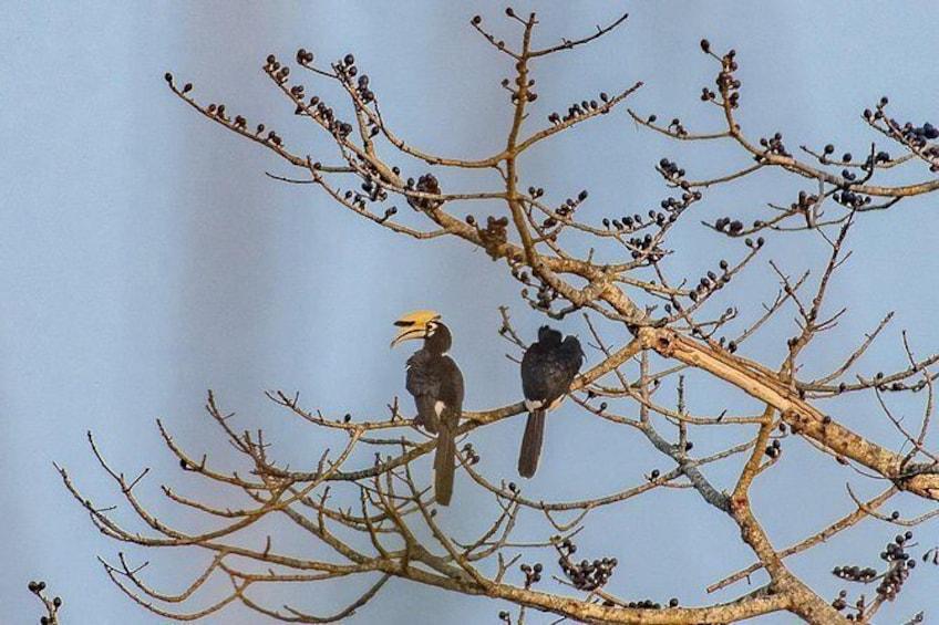 Show item 3 of 6. Chitwan Jungle safari Guided Private Day Tour