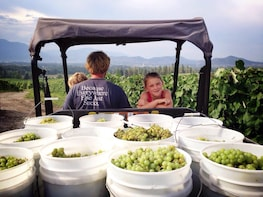 Lakeshore Route Wine Tour
