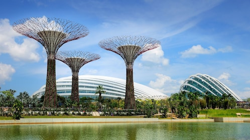 Supertrees at the Garden Bay in Singapore