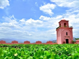 Winery & Pisco Tour in Ica