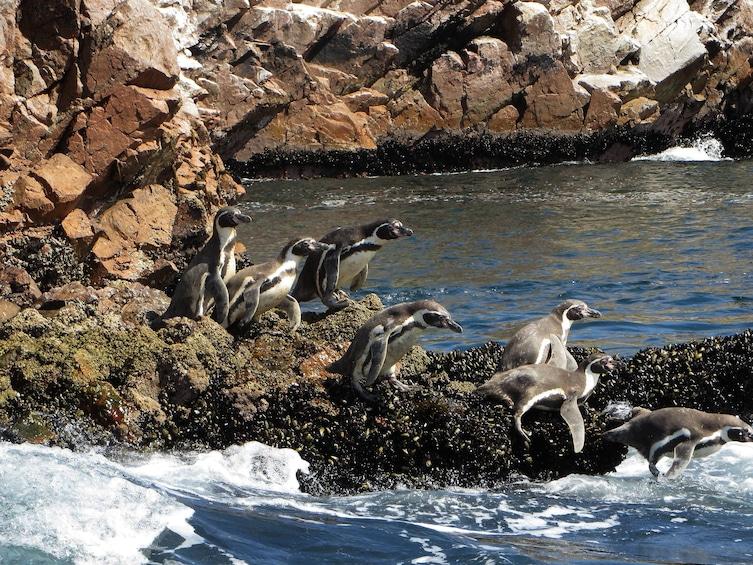 Show item 3 of 10. Ballestas Islands & Chandelier Tour from Paracas