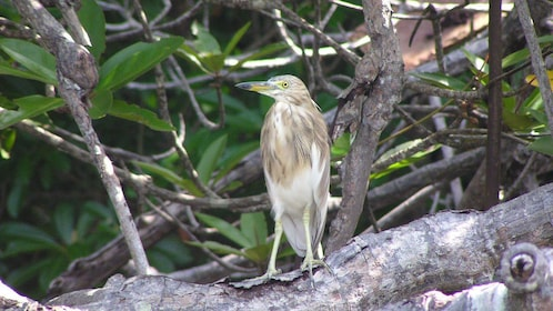 Bird in tree in Colombo