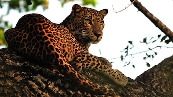 Private Full-Day Tour to Yala National Park