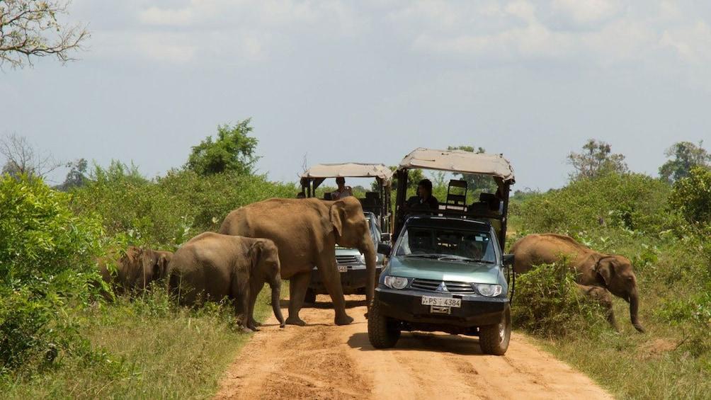 Show item 4 of 5. Elephants near colombo