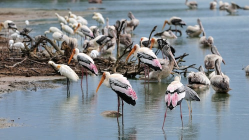 birds in the water in colombo