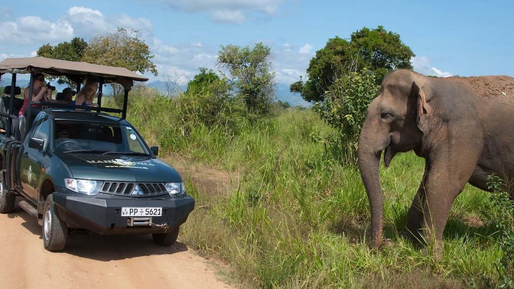Show item 1 of 5. Elephants near road in colombo