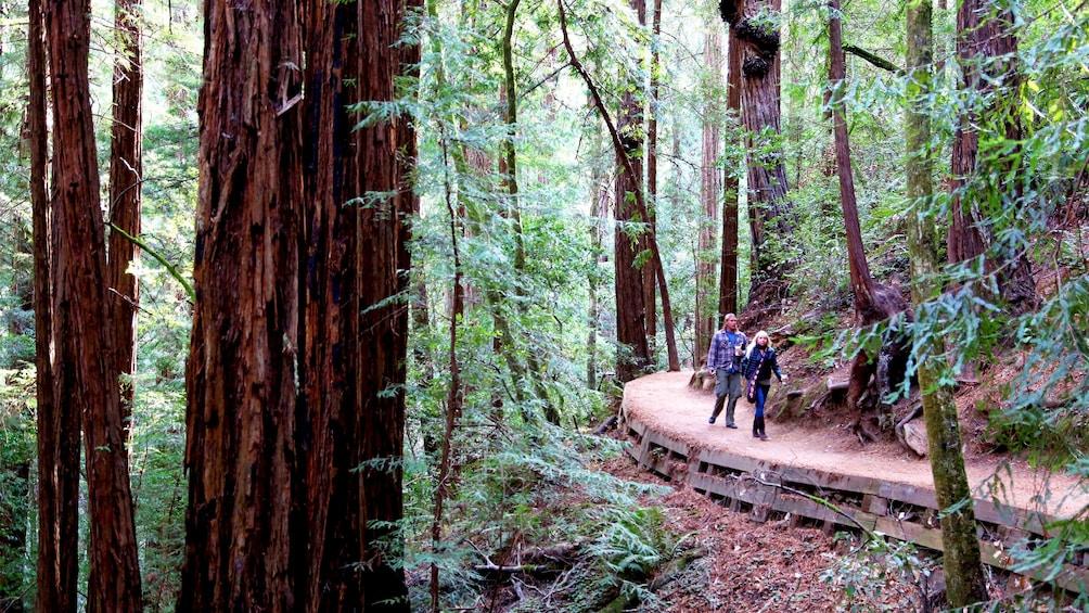 Hikers in the Muir Woods