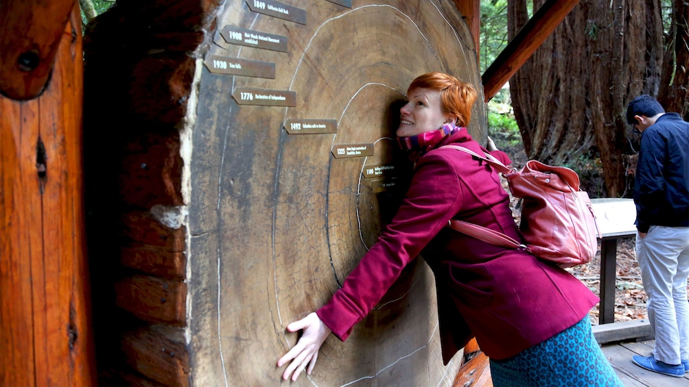 Woman hugging a cross section of a massive tree trunk in the Muir woods