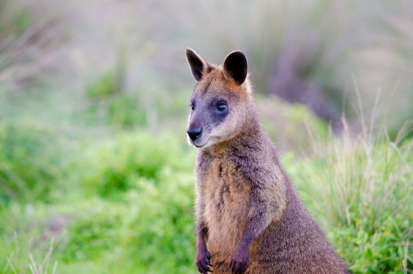 Small Group 2-Day Great Ocean Rd & Phillip Island Excursion