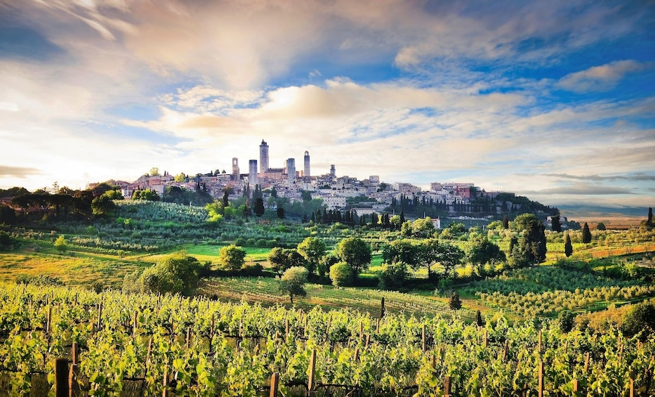Show item 10 of 10. Highlights of Tuscany: Siena, San Gimignano & Pisa with Lunch