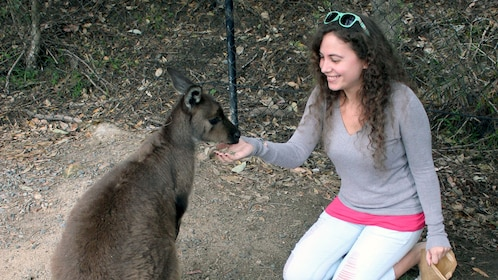 Woman interacting with wallaby in Port Stephens