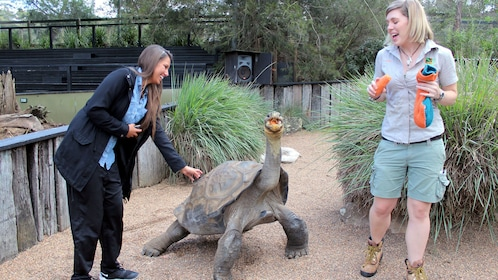 Galapagos tortoise getting fed while another woman smiles and pets the tortoise