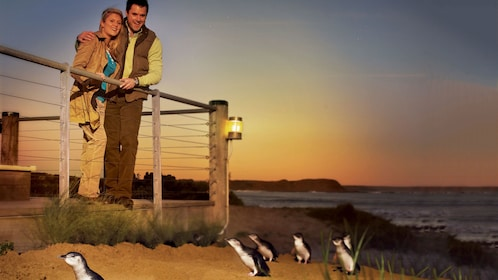 Couple at the beach looking at penguins on Phillip Island