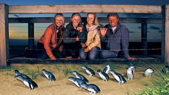 Night Time Penguin Parade on Phillip Island from Melbourne