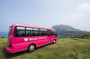 Pink Jeju Island Bus Tour