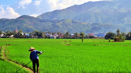 Farmer working on the rice paddy in Nha Trang