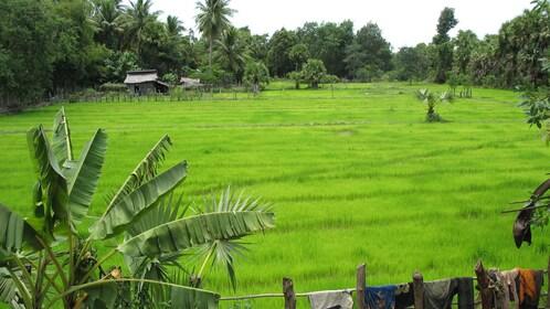 Rice paddies in Nha Trang