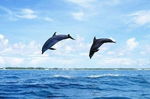 Sightseeing&Swimming with Dolphins at the west bay of Mauritius