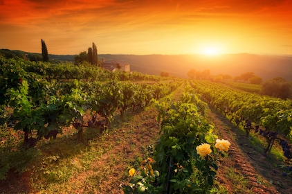 vineyards sunset.jpg