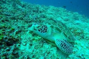 Snorkelling trip 3 gilis island