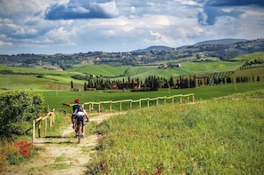 Full-Day Chianti Bike Tour from Siena