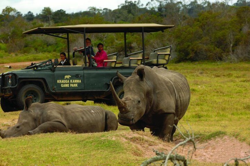 Guided drive with White Rhino