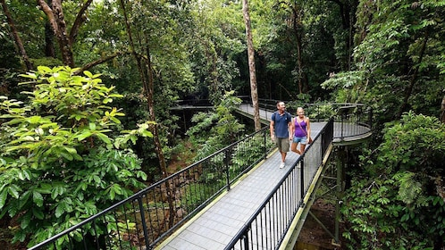 Couple enjoying a scenic walk at Daintree National Park in Australia